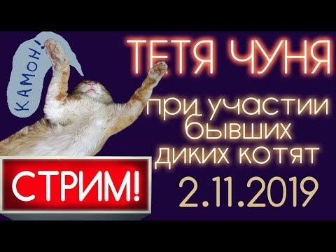 ЧУНЯ LIVE ❆ СТРИМ 2.11.2019