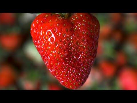 Lets Learn Fruits & Vegetables - Preschool LearningKaynak: YouTube · Süre: 23 dakika48 saniye