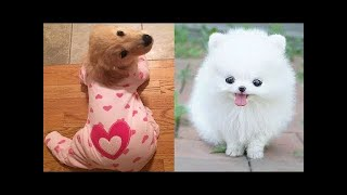 Cute baby animals Videos Compilation cute moment of the animals - Soo Cute! #30