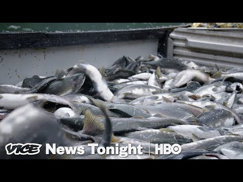 Alaska Initiative To Protect Wild Salmon Could Kill Off A Massive Open-Pit Mine (HBO)