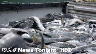 Alaska Initiative To Protect Wild Salmon Could Kill Off A Massive Open-Pit Mine (HBO)