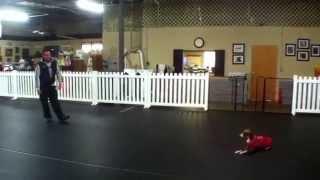 Dawbi, Italian Greyhound, Dog Training Charlotte North Carolina