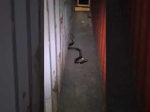 El video de la serpiente que obligó a cerrar la zona 8B del puerto de Algeciras