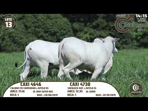LOTE 13   CAXI 4730, CAXI 4646