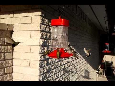 First Nature Hummingbird Feeder Rio Grande Valley