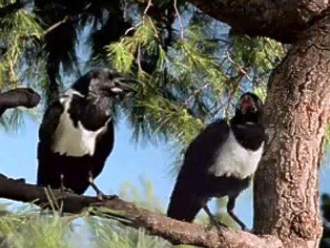 Windex Naughty Birds 2007 TV Commercial HD