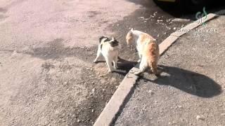 Коты. Бои без правил. Весна 2016