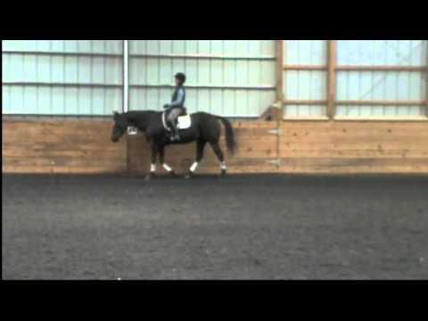 quarter horse mare for half lease