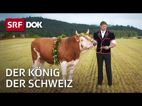 Der König der Schweiz – Vom Schwingen und seinen Helden