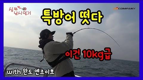 슬로우지깅,버티컬지깅 방어,부시리 낚시법 with 완도 엔조이호  대방어 걸려 들었으!!!