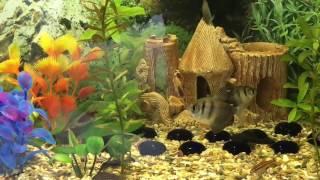 Что в аквариуме делает кот?