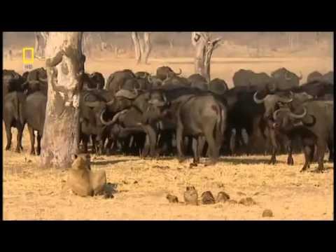 Doğa'da Vahşi Yaşam! +18 Belgesel | Türkçe Dublaj HD Belgesel