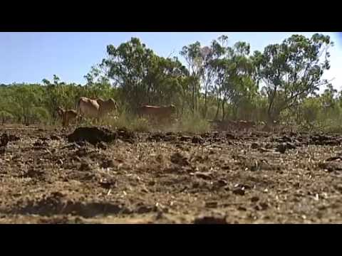 'Lying bastards': Qld graziers angry at Abbott Govt redtape for drought assistance