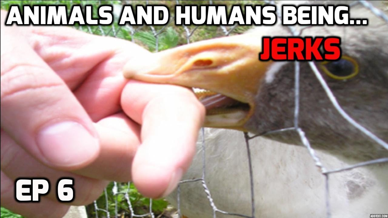 Animals and Humans being jerks ((compilation)) ep. 6 New!!!