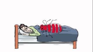 Why do Bedbugs bite us?