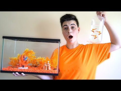 ORANGE *ONLY* FISH TANK AQUARIUM W/ ORANGE FISH!