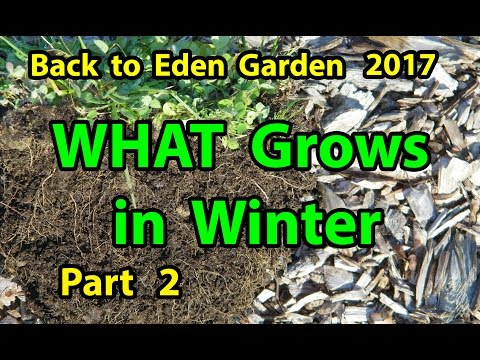 Back to Eden Organic Gardening Method 101 Soil Improvement with Wood Chips Garden Series  Part 2-