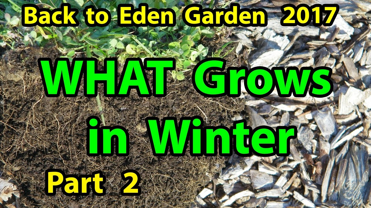 Back To Eden Organic Gardening Method 101 Soil Improvement With Wood Chips Garden Series Part 2