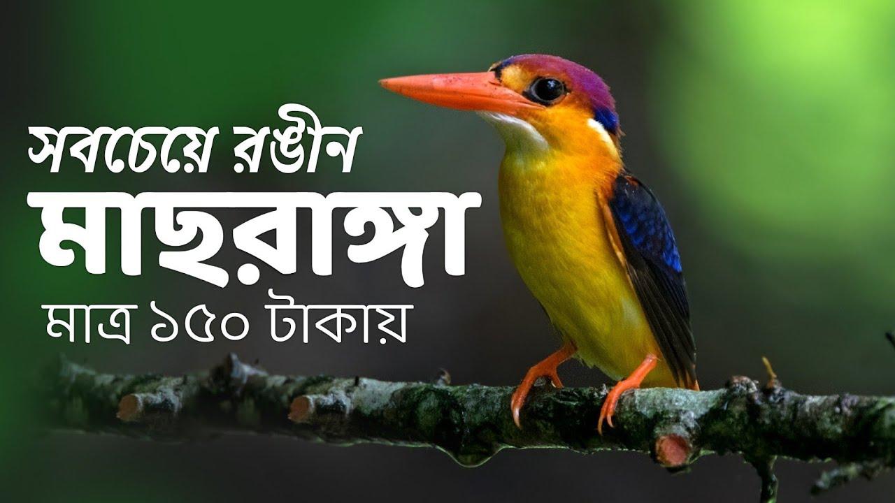 Birds of Maharastra | Mumbai Birds | Sanjay Gandhi National Park | Oriental Dwarf Kingfisher