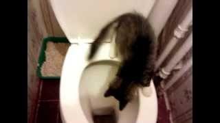 прикол с кошкой маней в туалете