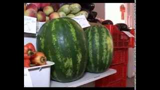 Как правильно выбрать арбуз(, 2013-08-09T10:02:34.000Z)