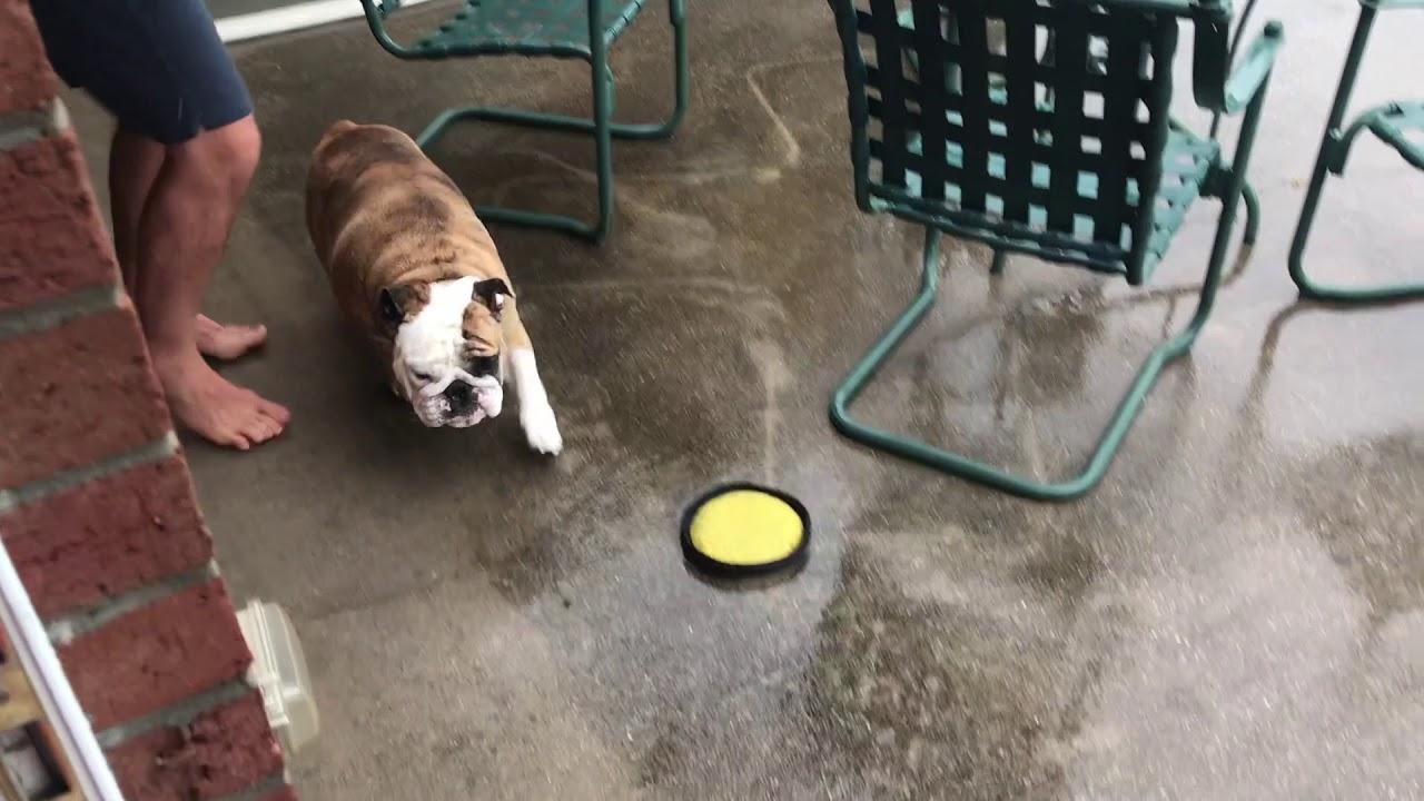 reuben-the-bulldog-when-you-ve-got-to-go