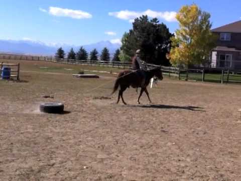 Colorado Horse Rescue - Little Bit: Partnership Training at MRHT