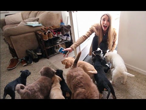 Thumbnail: Husband Surprises Wife by Filling House With Puppies!