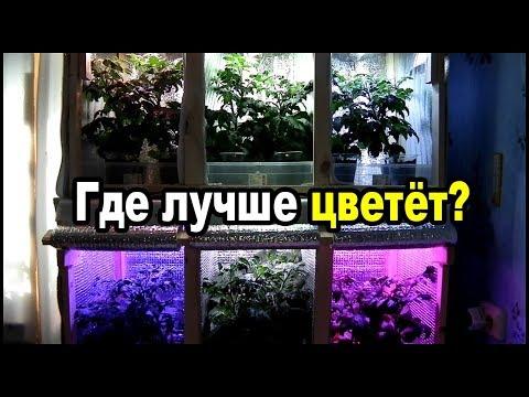 Лампы для растений какие лучше. Тест шести спектров фитоламп на цветении.