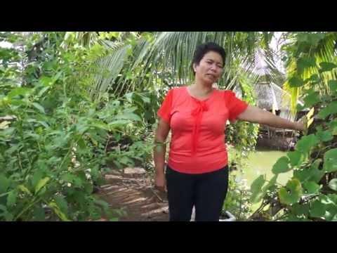 Video 7 - Sunrise Farmers Cluster, Talacogon, Agusan del Sur