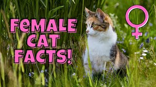 12 Fascinating Facts About Female Cats (#11 is Beautiful)
