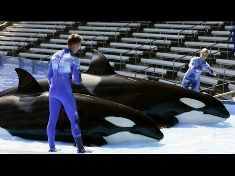 SeaWorld Ends Breeding Killer Whales in Fake Reform Deal