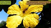 Цены на семена люффы в каталоге интернет-магазина ✿ яскрава клумба ✿ выращивание и продажа саженцев, растений, луковицы, семена,