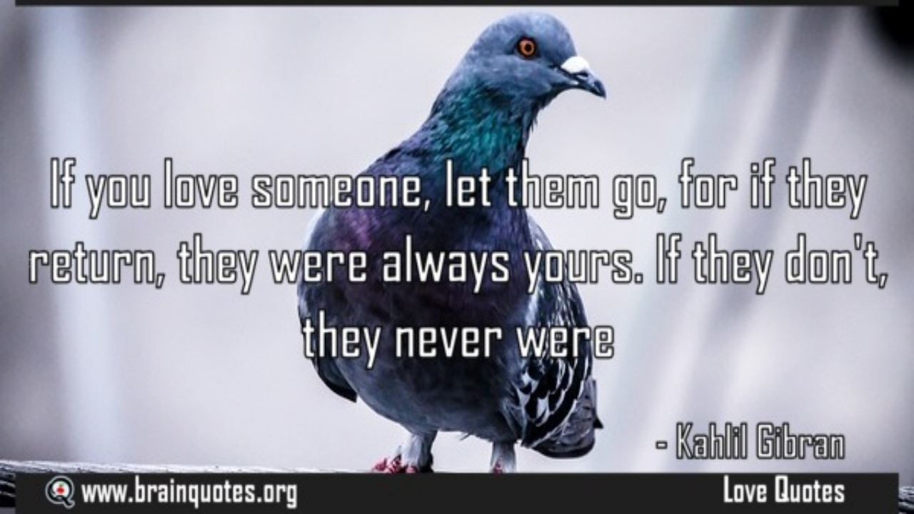 If you love something set it free or let it go Quote Meaning - YouTube