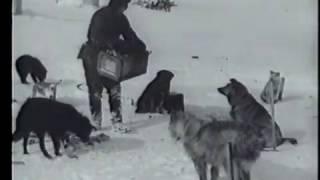 """""""На Северном полюсе"""" (1937); #северныйполюс"""