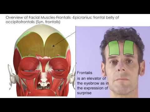 101 KT Training Botox Target Muscles  2014 Online Course