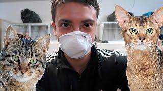 بيت بالسعودية فيه 200 قطة 🐈!