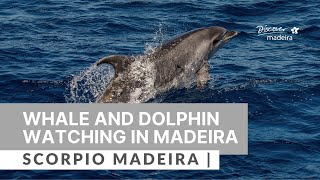 Dolphin and Whale Watching with Scorpio Madeira | ...