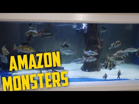Buying Amazonian Monsters