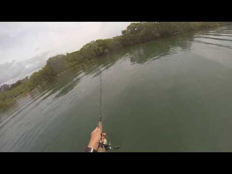 Flathead fishing Currumbin Creek