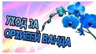 УХОД за орхидеей ВАНДОЙ [полив , уход , подкормка](Всем привет, меня зовут Данил! И я занимаюсь разведением орхидей, в домашних условиях. Своими успехами я..., 2015-07-11T13:15:11.000Z)
