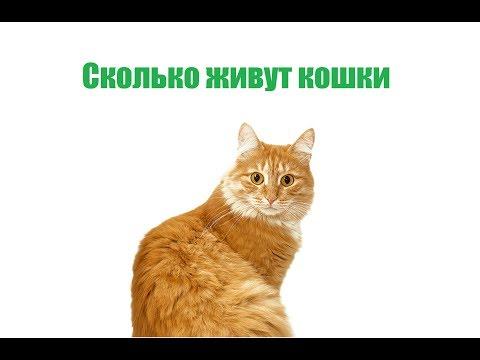 Сколько Живут Кошки & Как Продлить Жизнь Кошки. Ветклиника Био-Вет