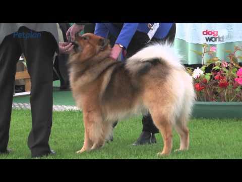 Darlington Dog Show 2015 - Utility group FULL