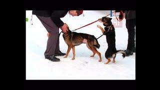Ярмарка домашних животных / Новости