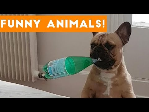 Funniest Pets of the Week Compilation November 2017 | Funny Pet Videos