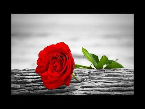 une magnifique chanson d amour mélancolique de djilali hamama anta kemini