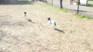萩野スーパーミニ犬舎の中嶋さんのお声掛けで集まりました。 萩野スーパ...