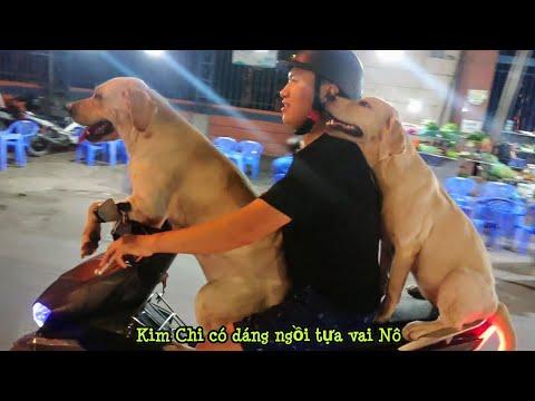Người Yêu Không Có, Chó Có 2 Con - Kim Chi Củ Cải Ngồi Xe Máy đi Chơi Siêu Ngầu