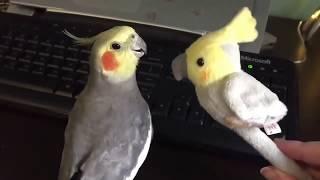 DANK BIRDS MEME COMPILATION #5
