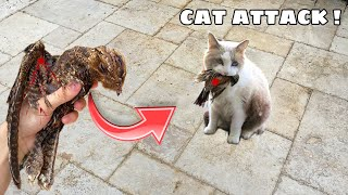 BABY BIRD FOUND MAULED By EVIL NEIGHBORHOOD CAT ! WILL HE MAKE IT ?!
